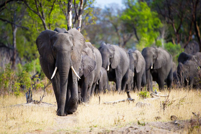 Wild at Heart Journeys Conservation Hwange Zimbabwe Davidsons Camp Elephant
